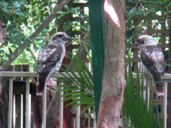 Rainbow Valley Toddler room, birds in outdoor area